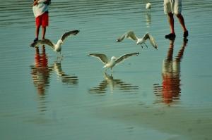 York Beach fowl