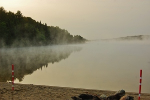 Early summer morning mist...
