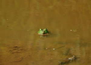 ...a frog