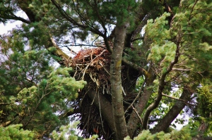 the Eagle's nest out on the island