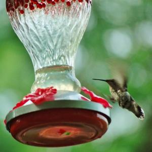 hummer in flight at feeder