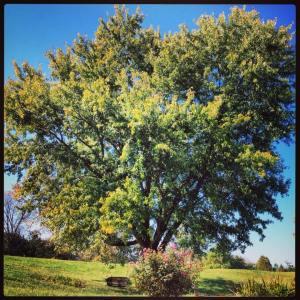 Tree views 1 & 2
