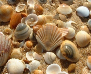 'Sea Shell Collector'